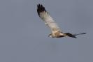 Diverse vogel soorten_1