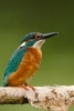 Diverse vogel soorten_2