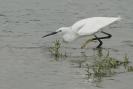 Diverse vogel soorten_3