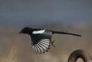 Diverse vogel soorten_4