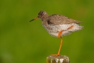 Diverse vogel soorten_5