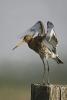Diverse vogel soorten_6