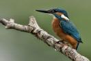 Diverse vogel soorten_7