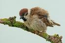Diverse vogel soorten